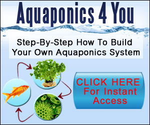 How To DIY Aquaponics